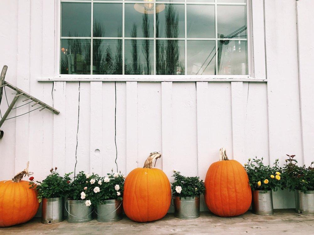 edison-pumpkins.jpg