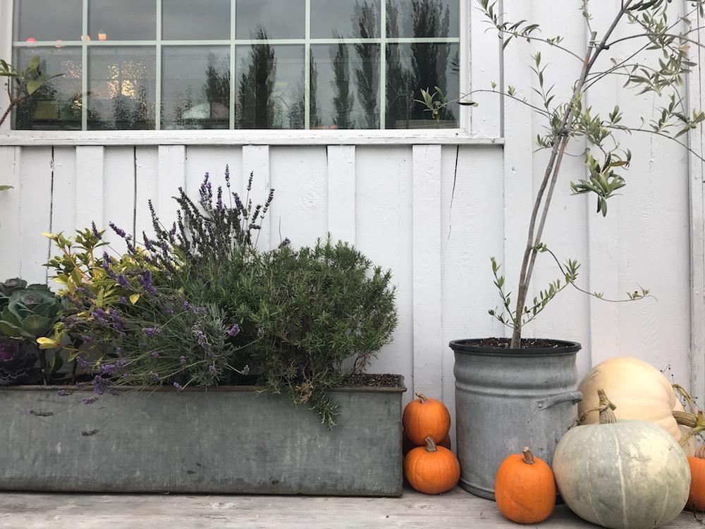 Autumn in Edison, WA | Kerstin Martin Squarespace Studio