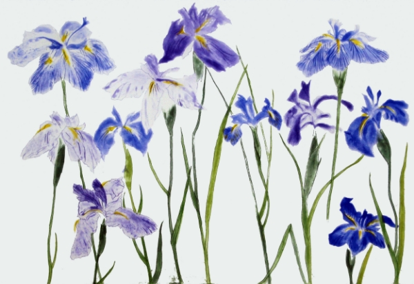 ©Elizabeth Blackadder 'Irises' etching, 55x48cm £1000