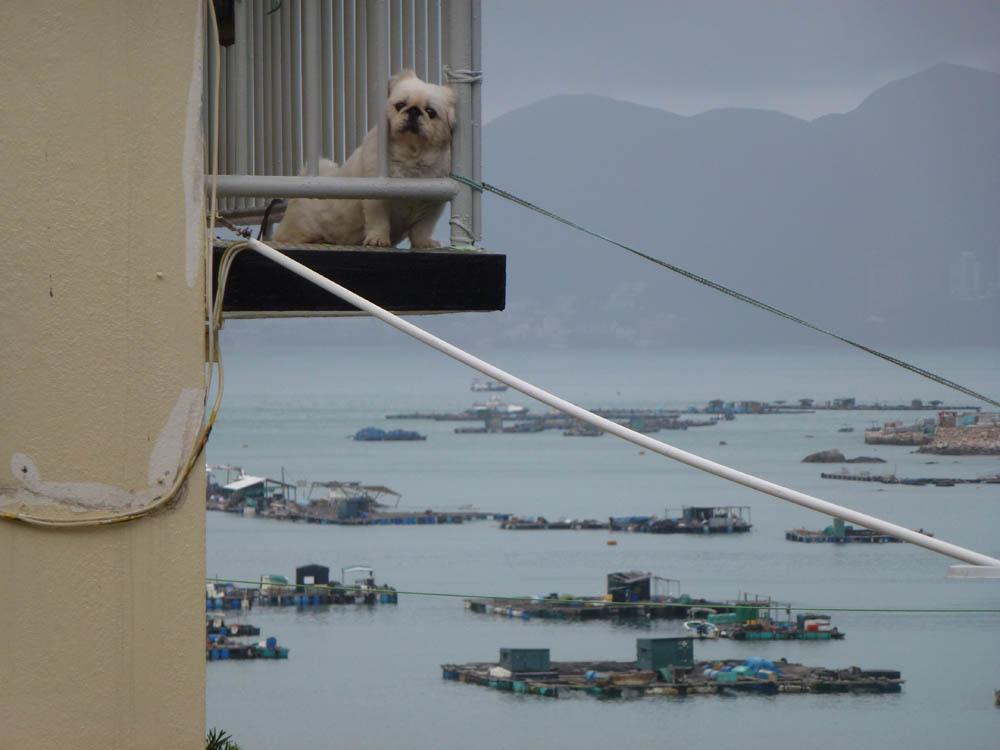 Anna Koenigs - Hong Kong N° 16
