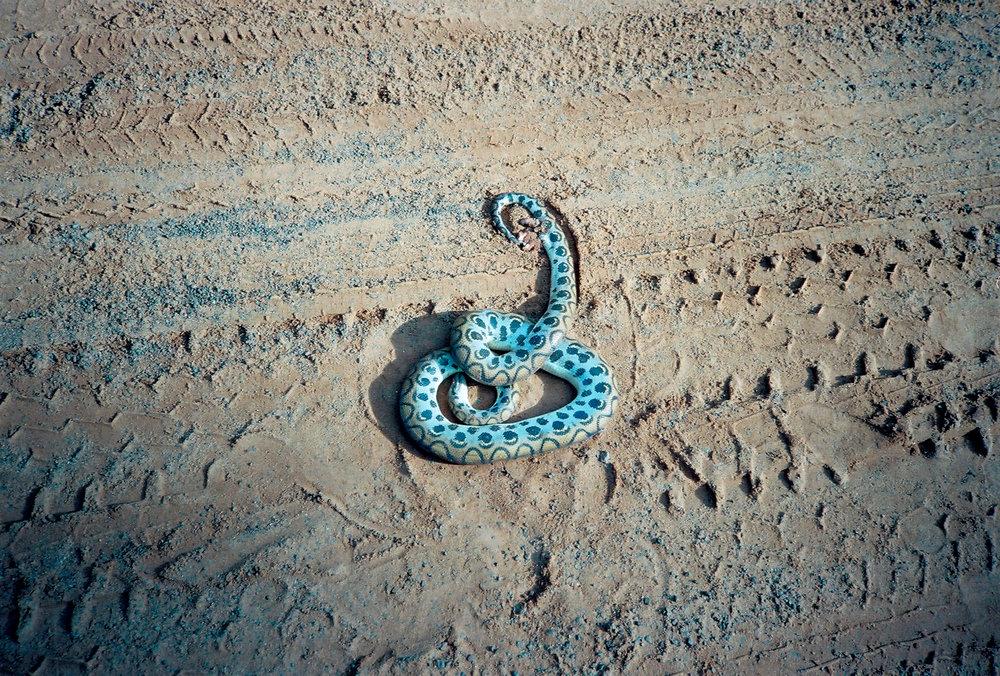 Road Snake.jpg
