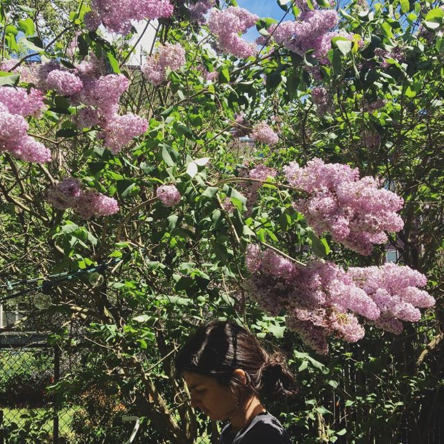 Lost in the lilacs