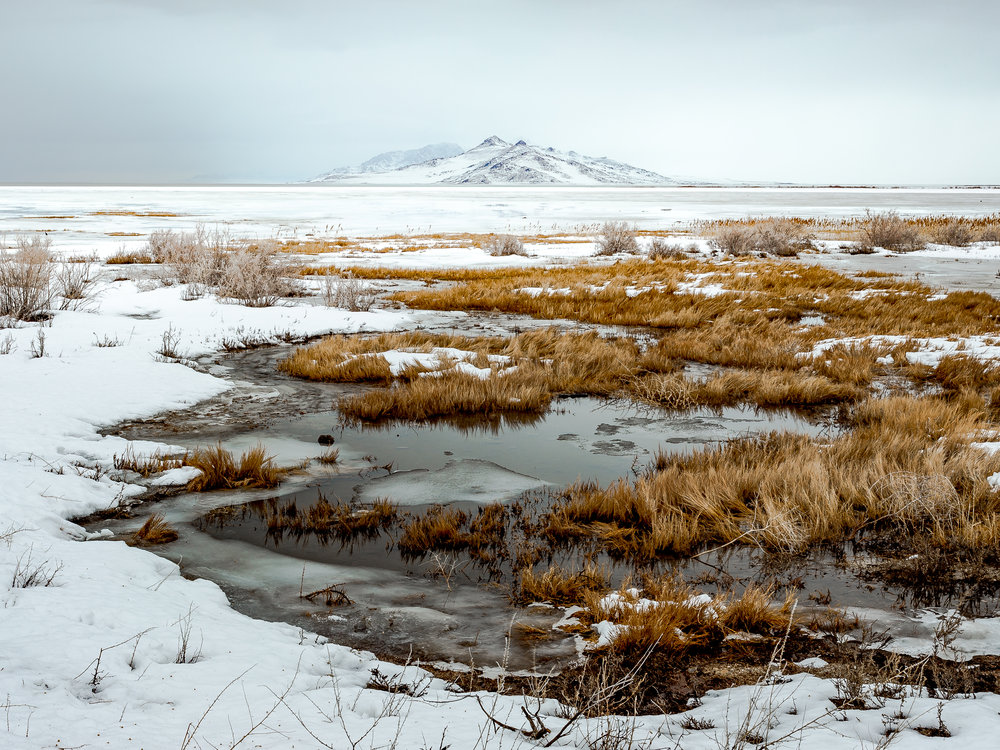 Antelope Island/Great Salt Lake, Utah