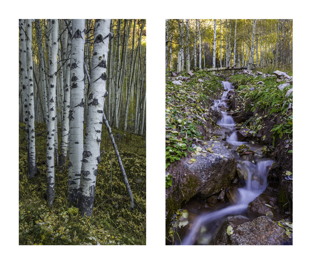 Aspen Forest, Snowmass Wilderness        |      Right: Runoff, Snowmass Wilderness                                                                    ©Andrew Lockwood 2017