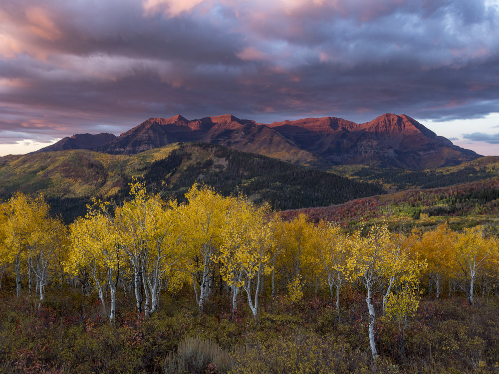 Fall Foliage at sunrise with Mount Timpanogos alpenglow