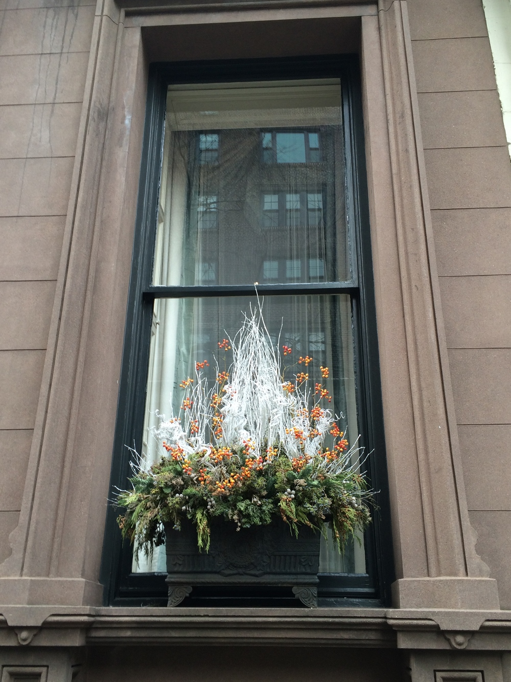 Window Box, Brooklyn Heights