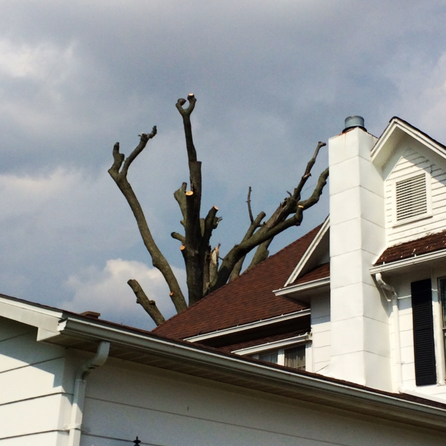Our neighbor's hat-rack. It was once a tree.