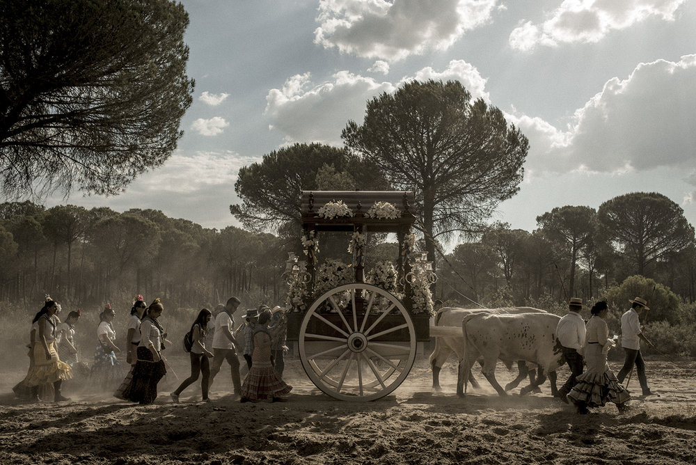 During the procession to El Rocío town, each brotherhood carries its own Simpecado, a wagon with a representation of the Virgin Mary. In 2016 there was 117 brotherhoods reaching the town. Huelva's brotherhood is considered the biggest one with approximately 14000 pilgrims. Hinojos, Spain, May 2015.