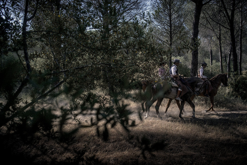 Most of the journey close to El Rocío takes place inside a National Park or protected areas. Only few cars are allowed by each brotherhood. Horse riding is a common way to reach the town. Pilas, Spain, May 2015.