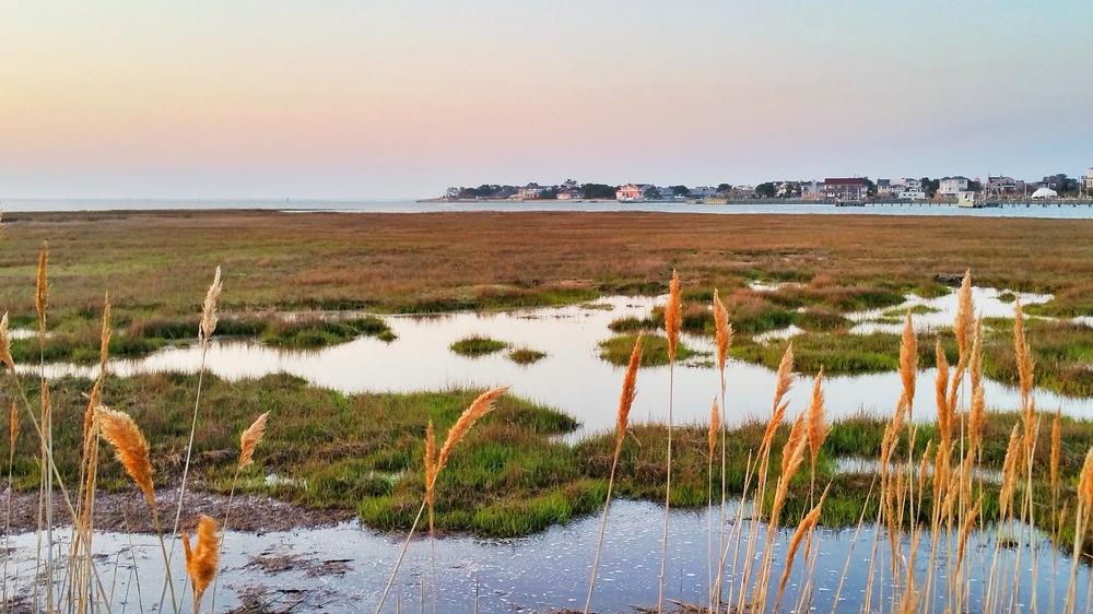 u-wetlands.jpg