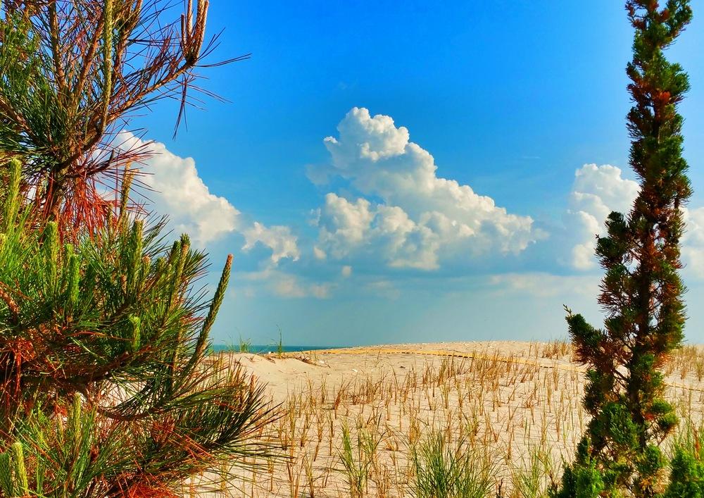 pinetree-cloud.jpg