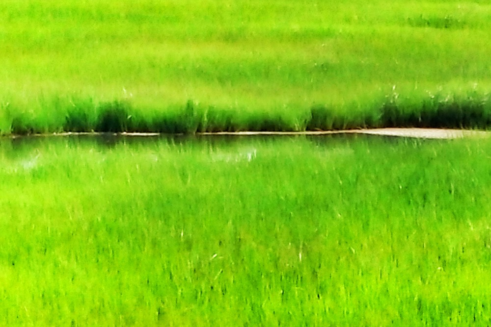 marsh-pond-2.jpg