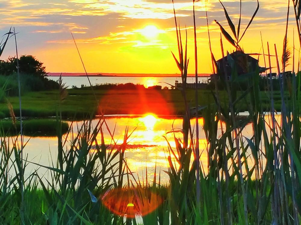 sunset-reeds-pool-2-Ca.jpg