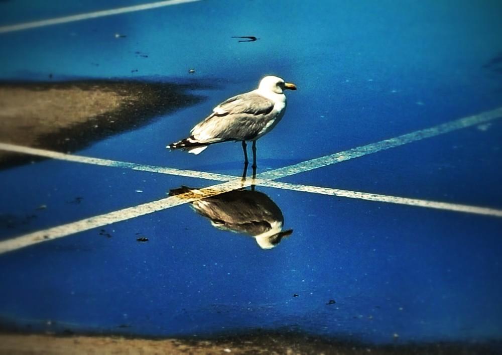 gull-x2.jpg