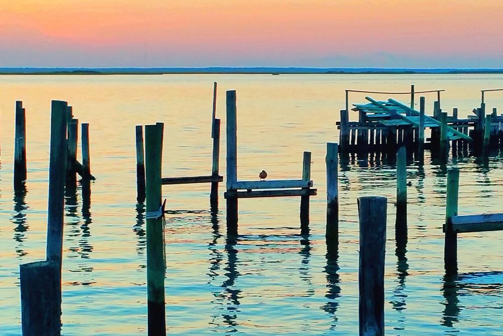 old-dock-gull-2.jpg
