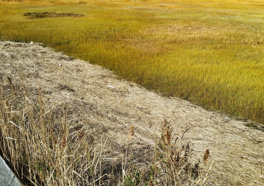 Mustard Marsh
