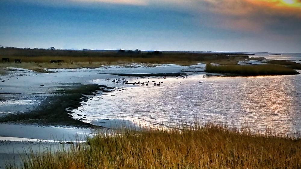 November Ducks