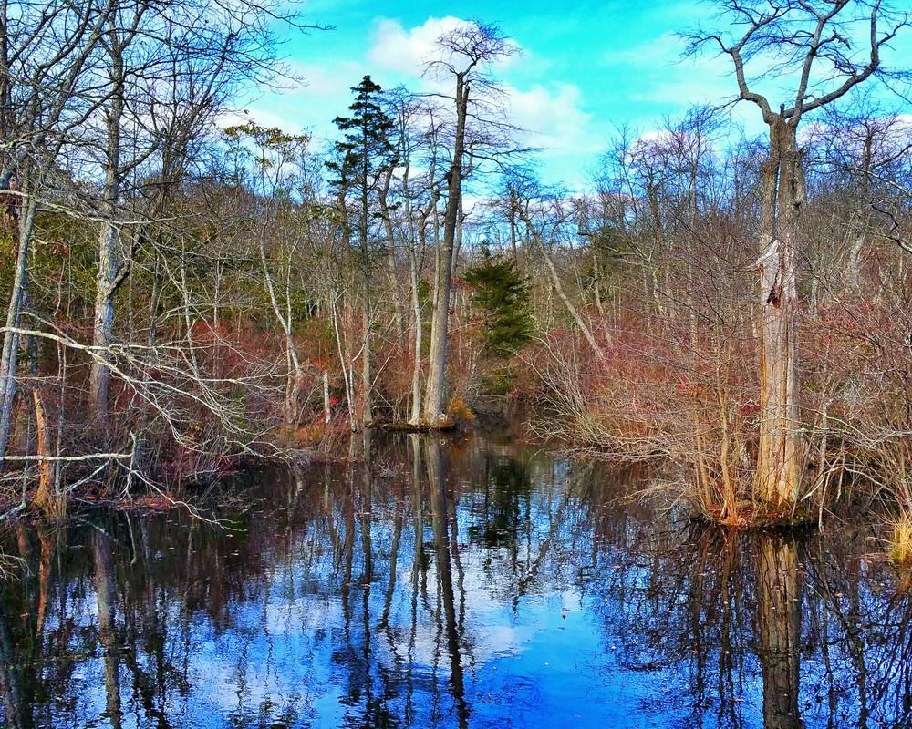 Marshland Stream