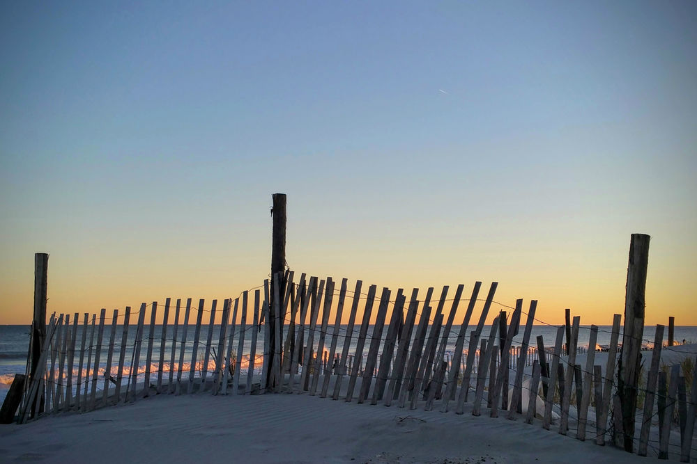 Late Dune Fence