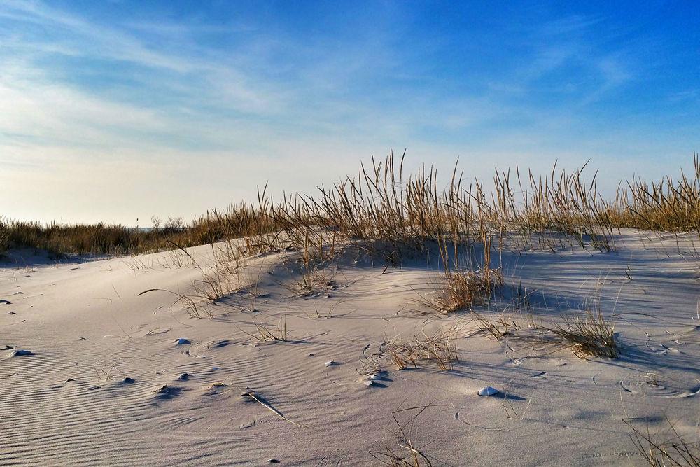 December Dune Grass