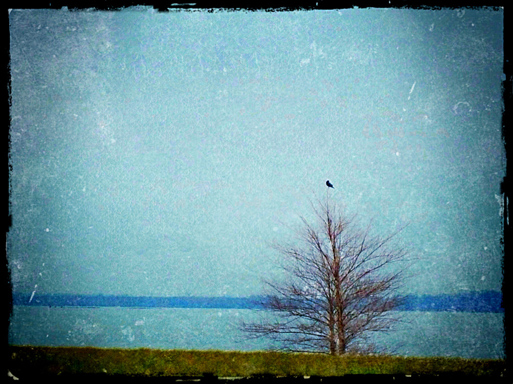 Bird by the River