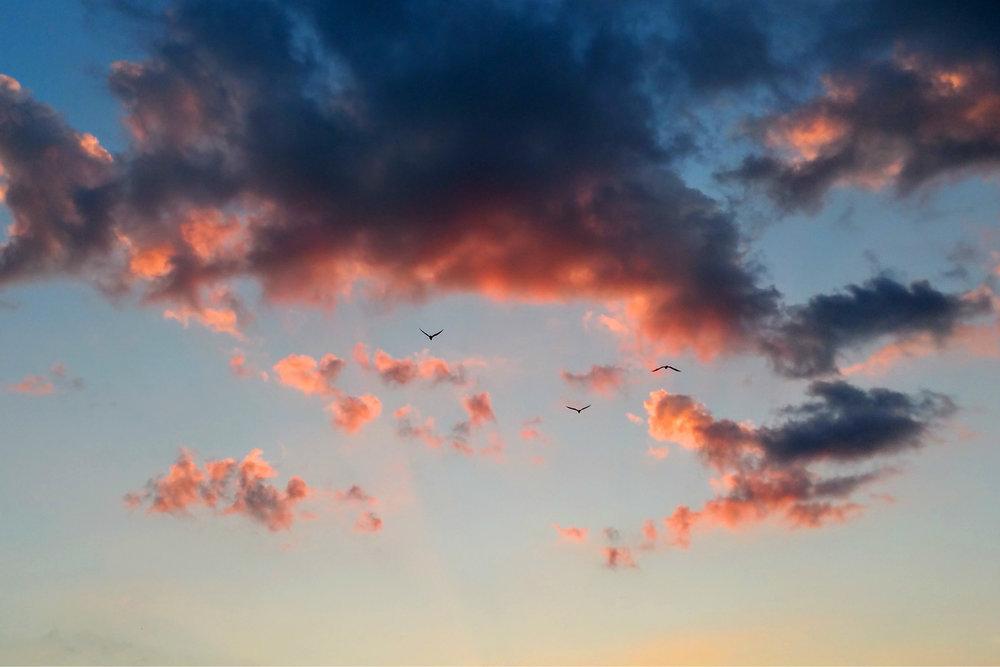 3 Gulls Going Home