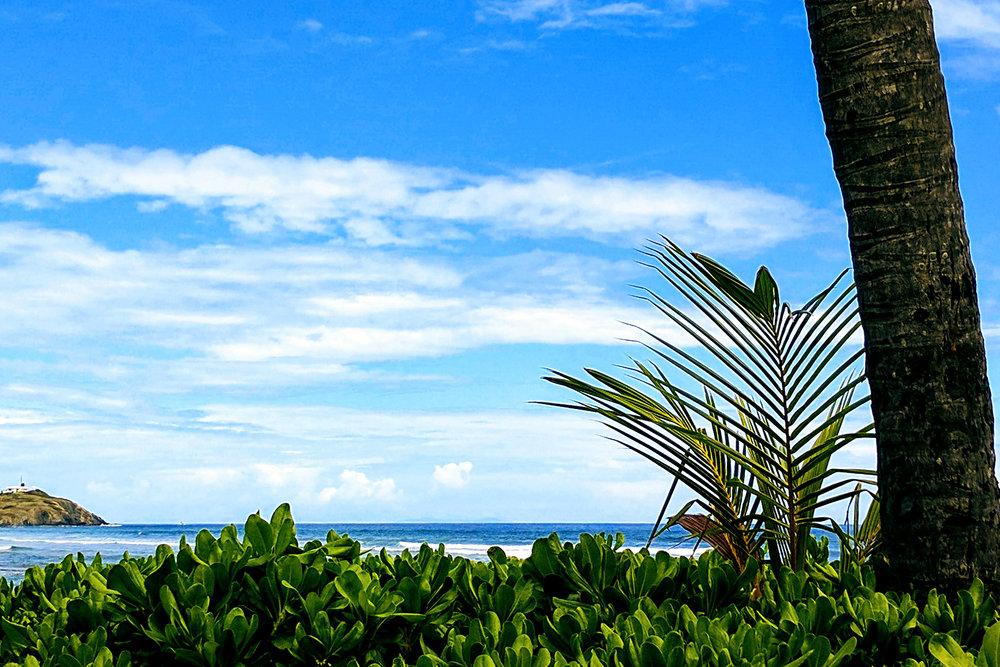 Palm Bluff