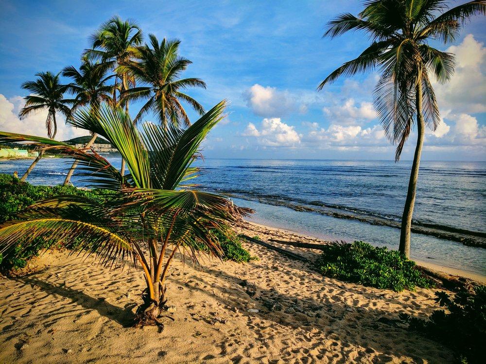 Morning Palms