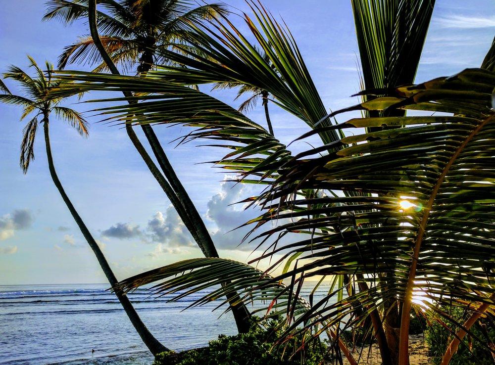 Morning Sun Palms