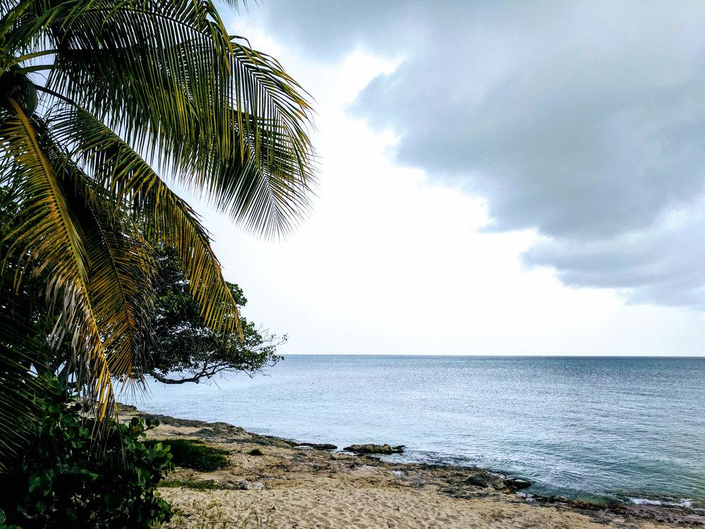 Palm Cloud