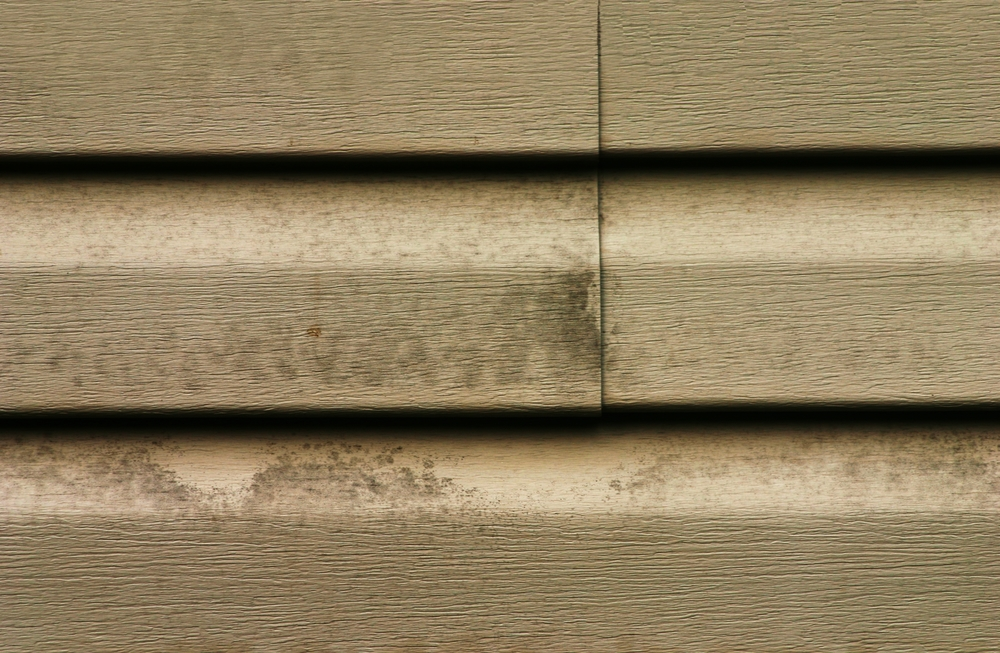 Mold and mildew stains on vinyl siding.
