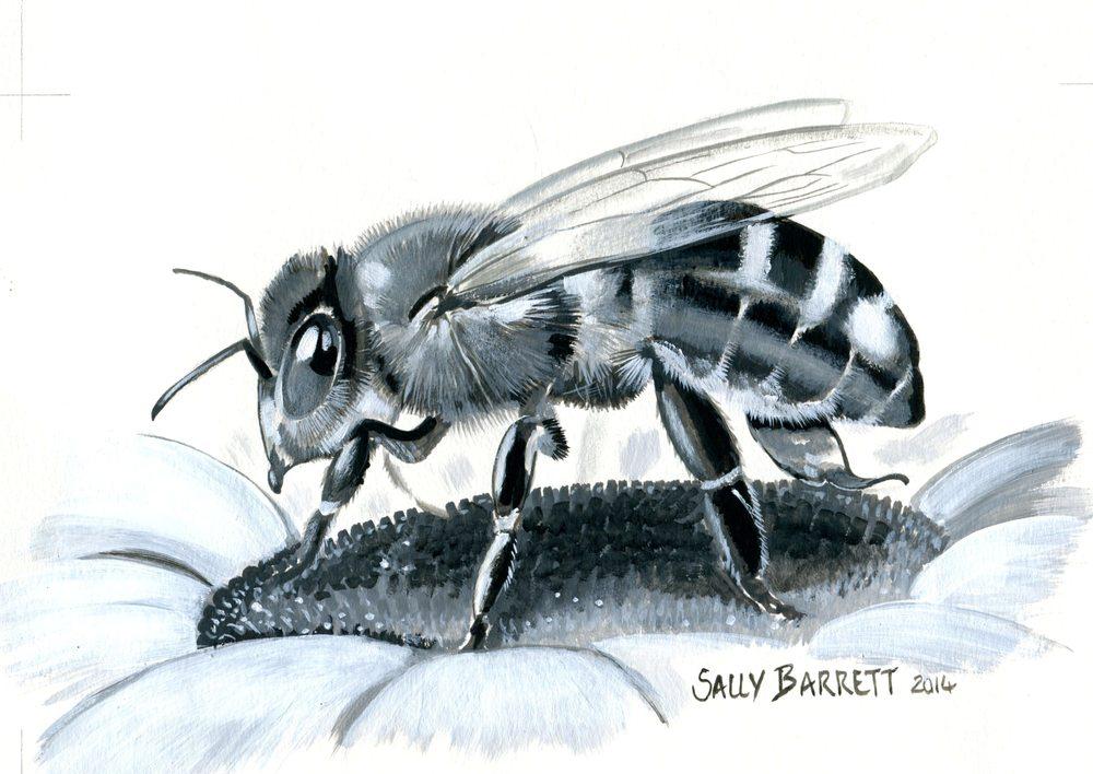 Barrett, Sally 63       Bee on Flower, Gouache
