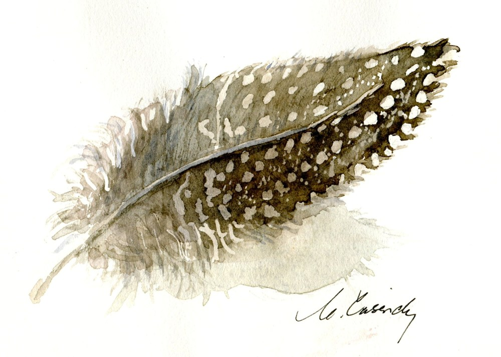 Cassidy, Carol  83a  One Guinea Fowl Feather, Water-colour.