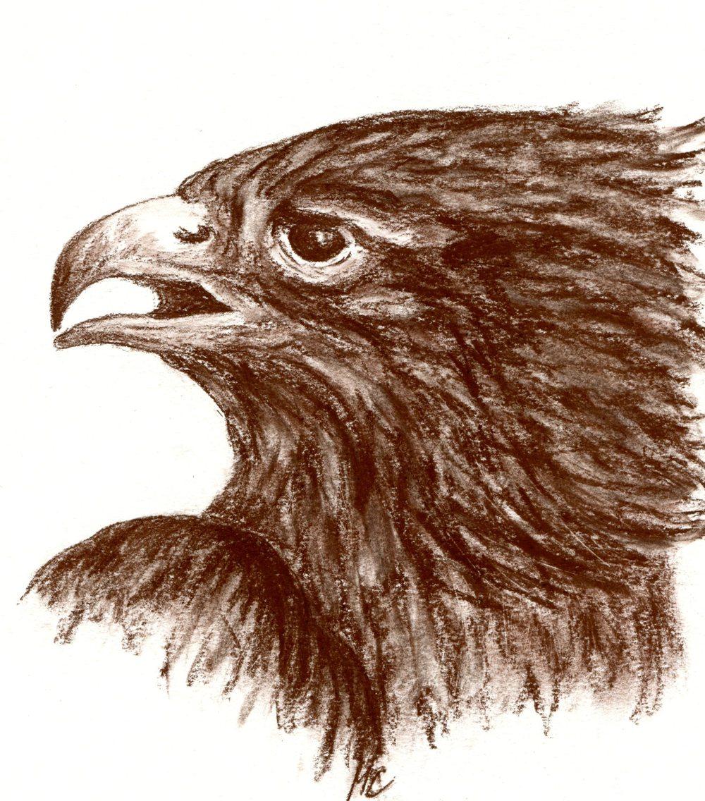 Claussen, Maike  32b Bird of Prey, Sepia.