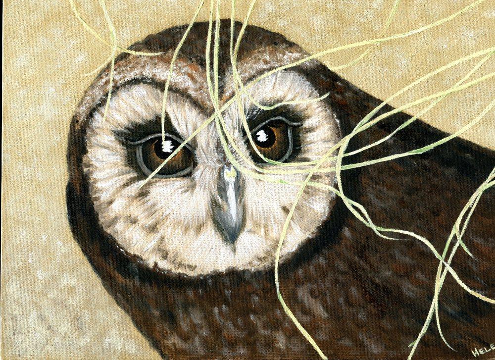 Cohen, Helen    14a Marsh Owl, Oil on canvas board.