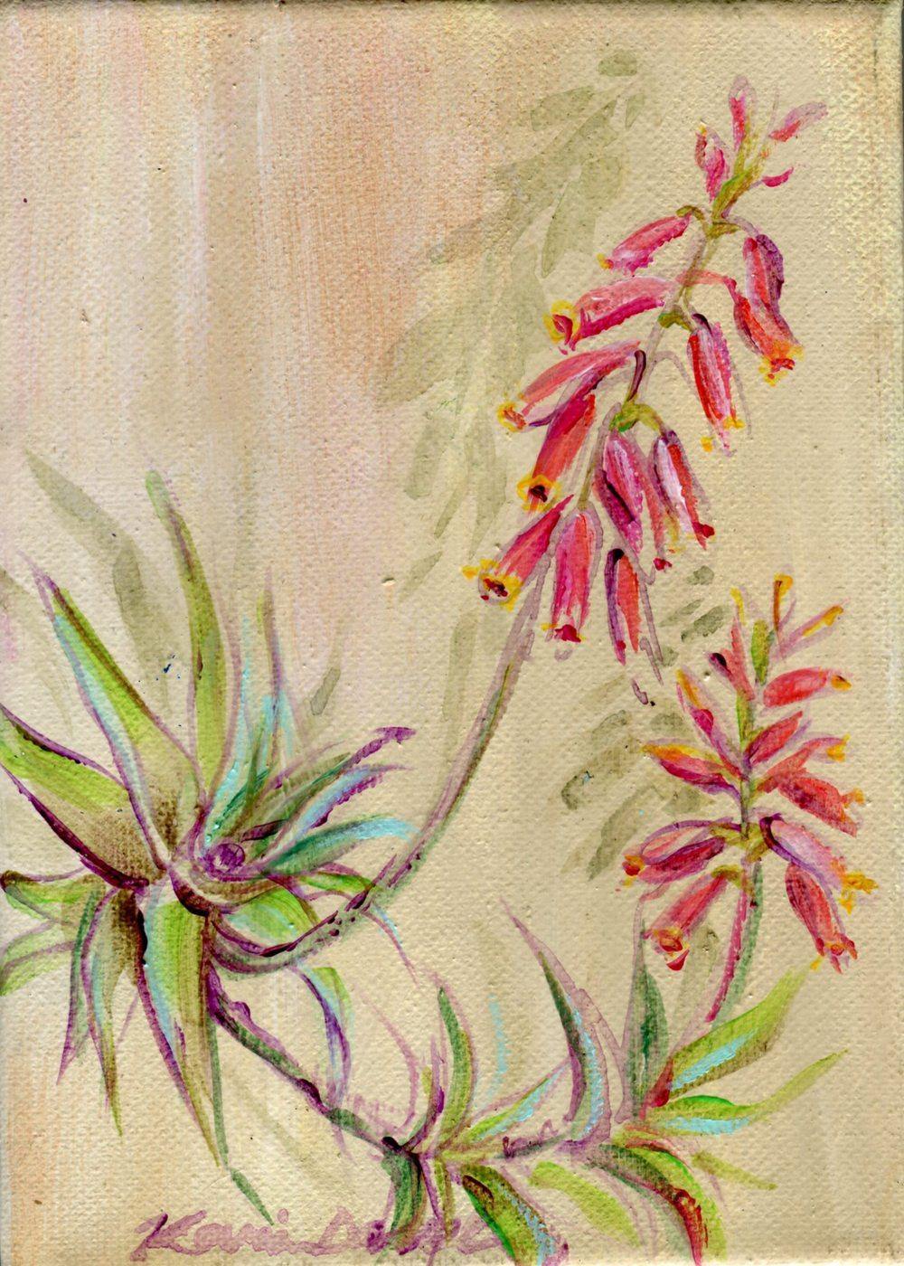 Davel, Karin 78b      Aloe 2, Acrylic on canvas.