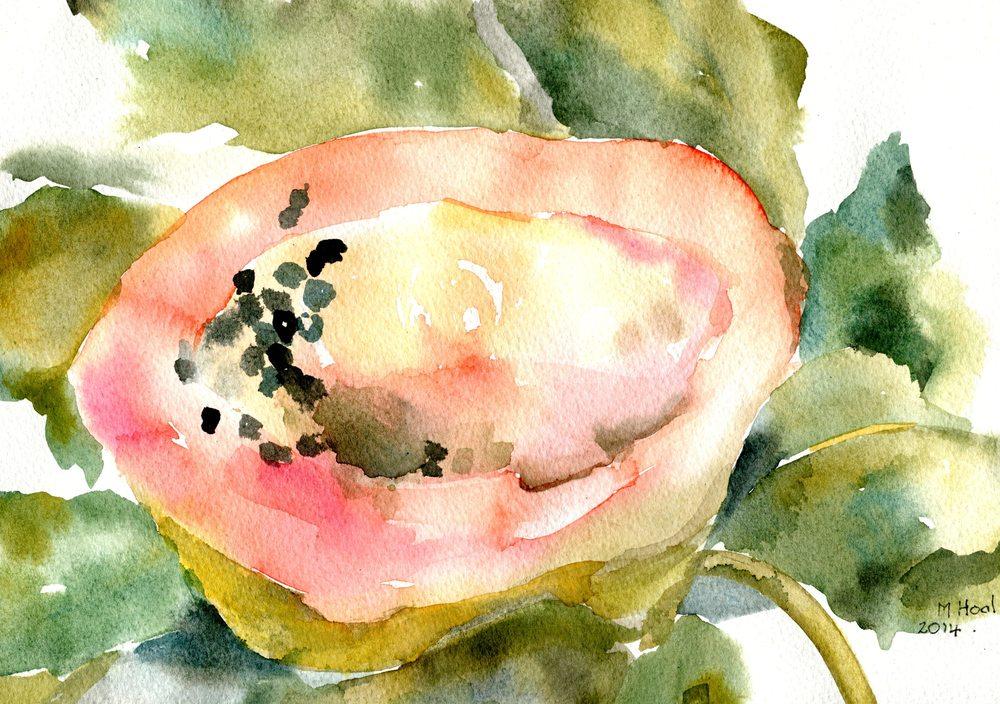 Hoal, Margaret 19b Papaya, Water-colour.jpg