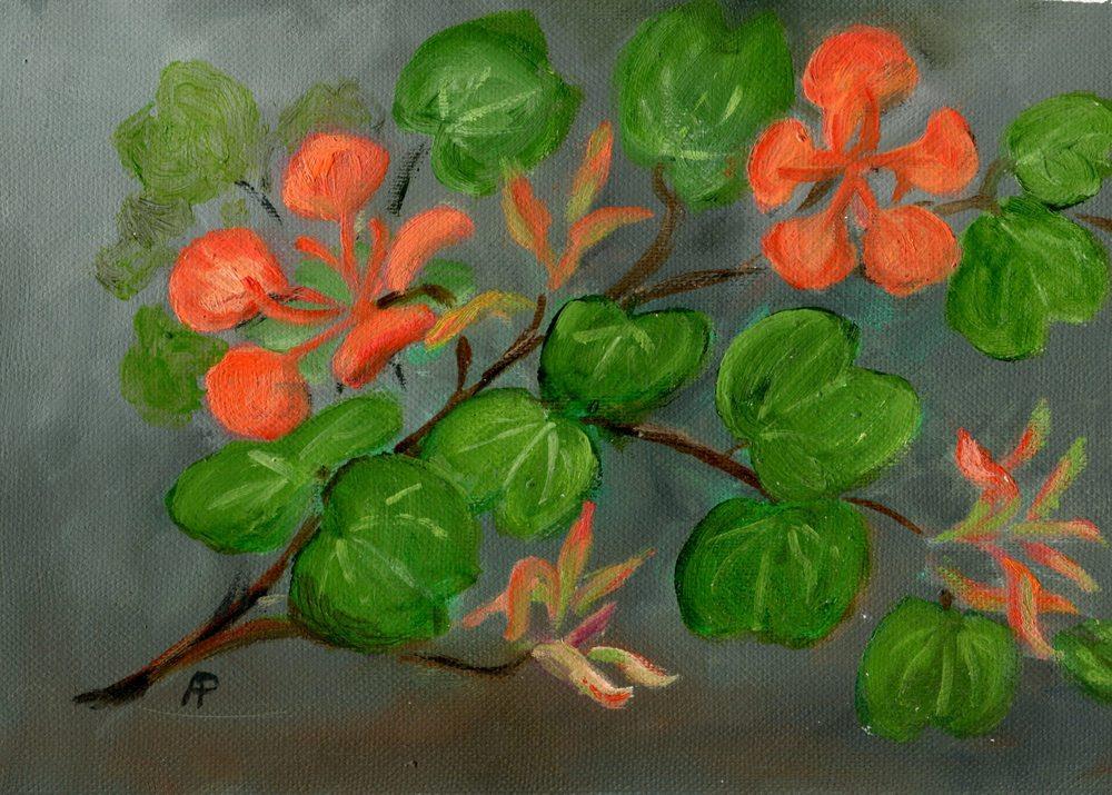 Pettifer, Anna  41a  Bauhinia Galpinii, Oil on canvas.