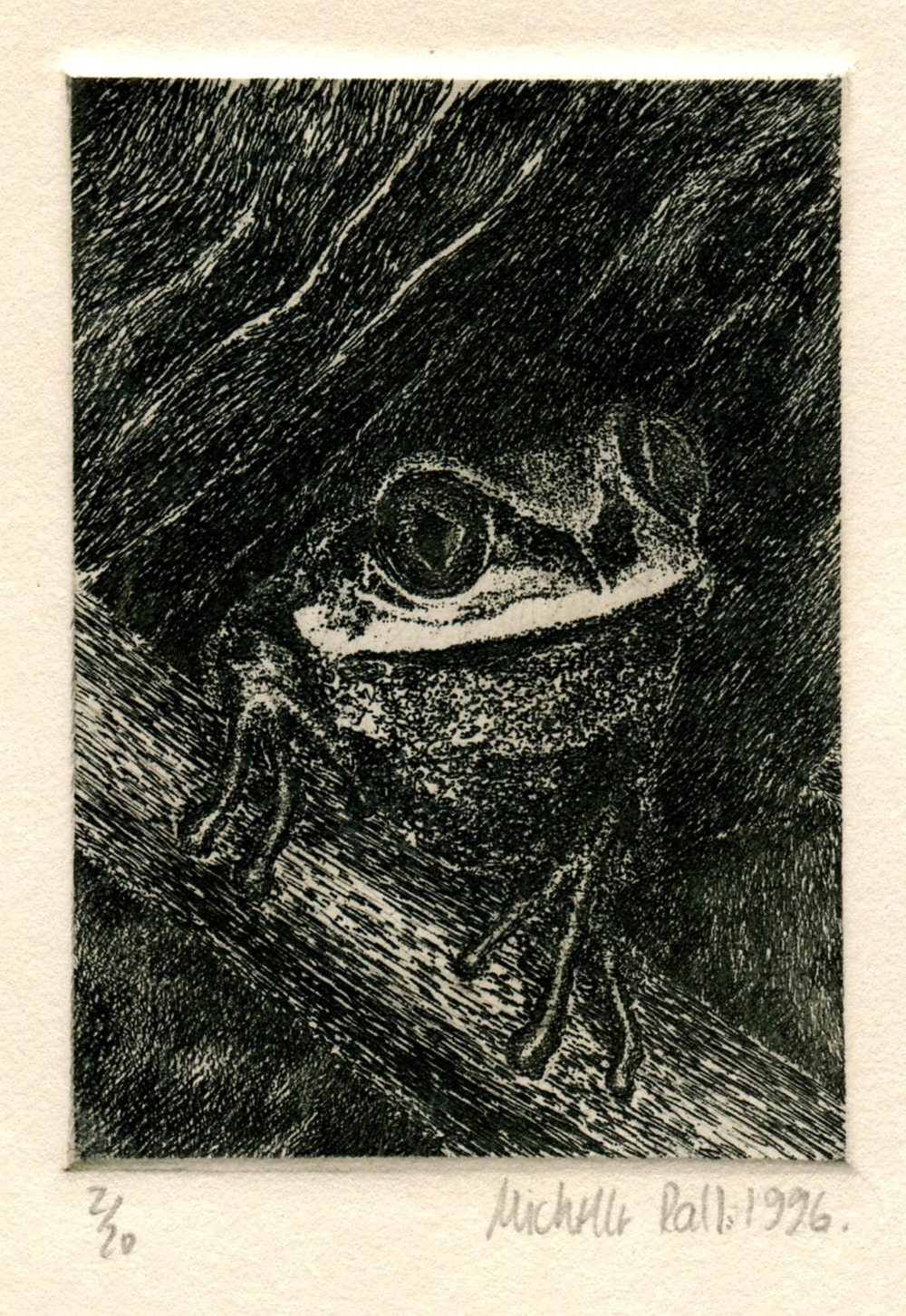 Rall, Michelle    69a Reed Frog, Etching.
