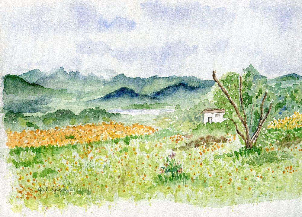 50a Glynn, Gail - Namaqualand, Water colour.jpg