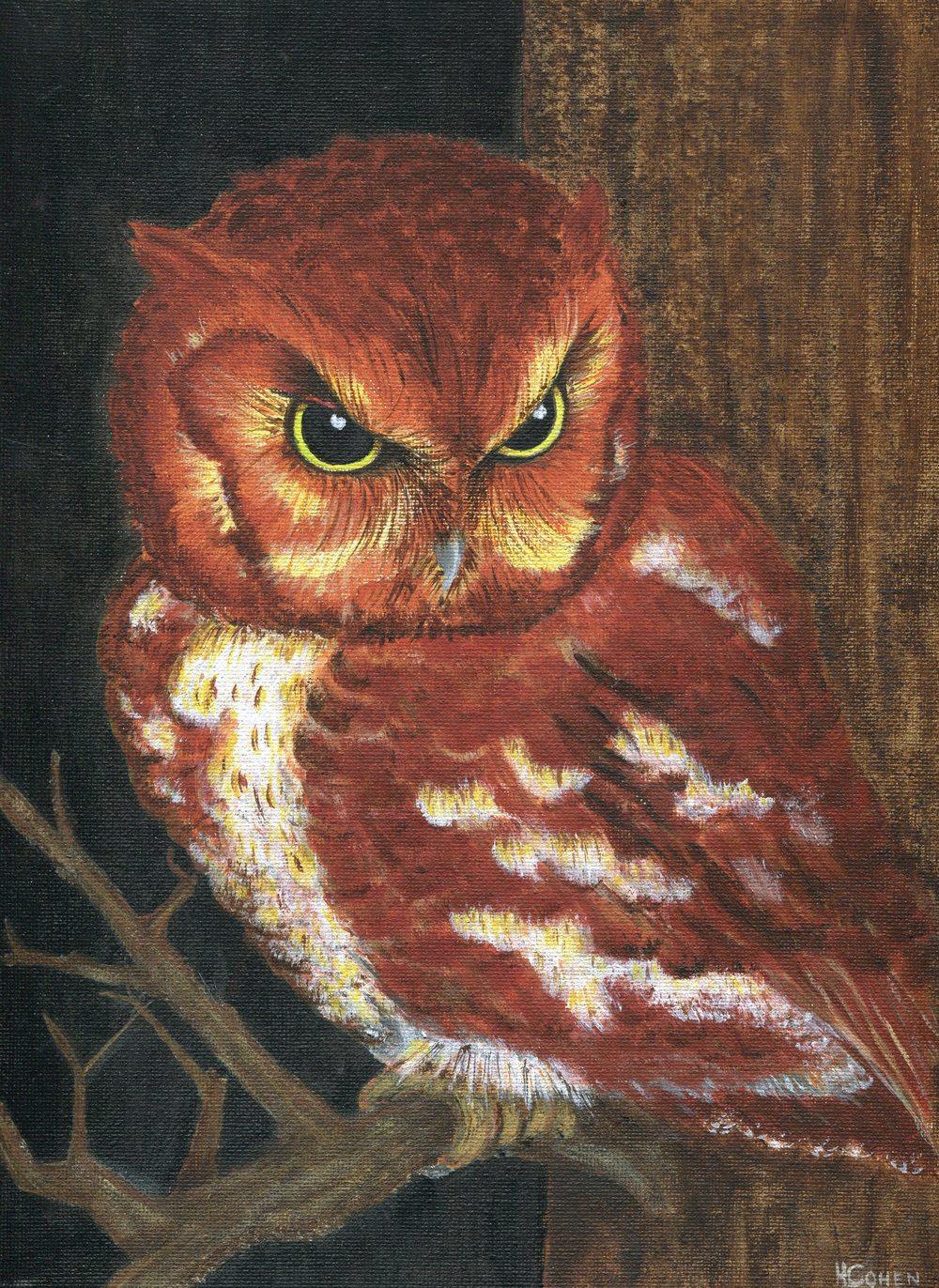 68 Cohen, Helen - Angry Owl, Acrylic on Board.jpg