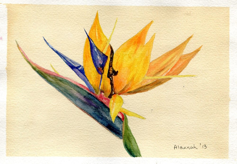 65b Valentine, Alannah, Strelitzia, Watercolour.jpg