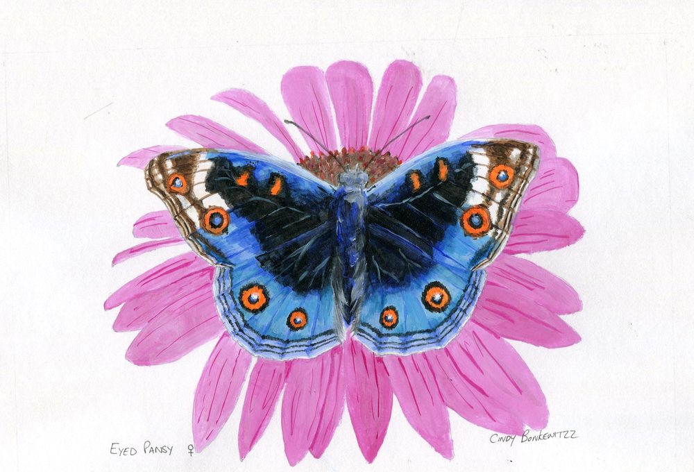 66c Bonkewitzz, Cindy - Eyed Pansy Butterfly,Acrylic on paper.jpg