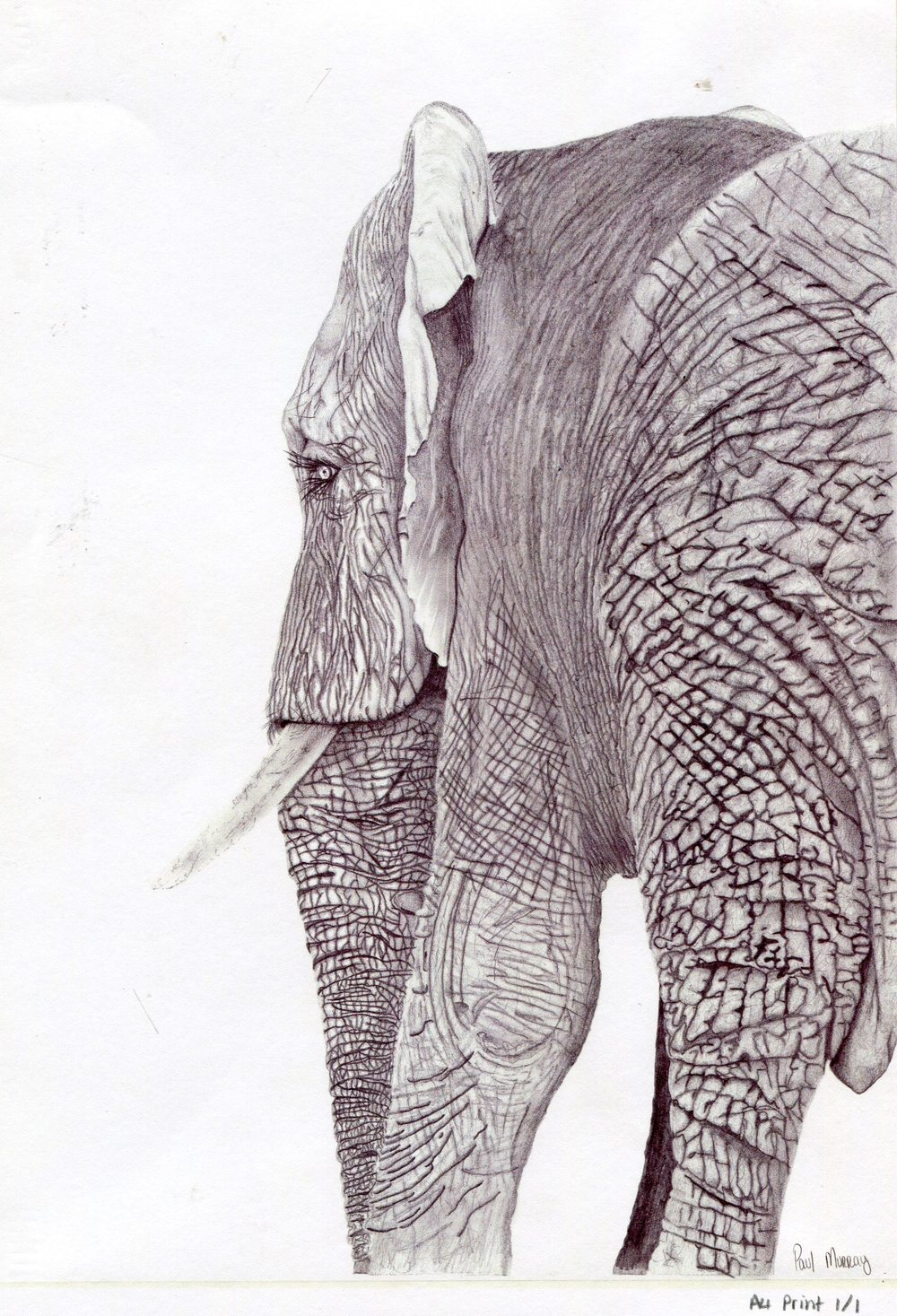 69b Morray, Paul - Elle, Pencil print.jpg