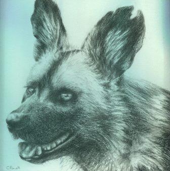 52 Powell, Cindy -  Wilddog, Pencil.jpg