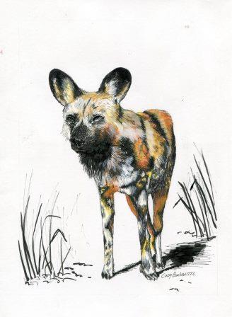 66b Bonkewitzz, Cindy - African Wild Dog, Mixed Media..jpg