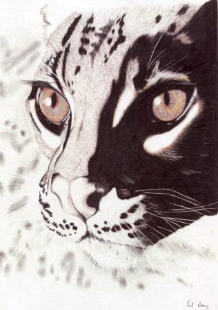 69d Morray, Paul - Ocelot, Pencil Print.jpg