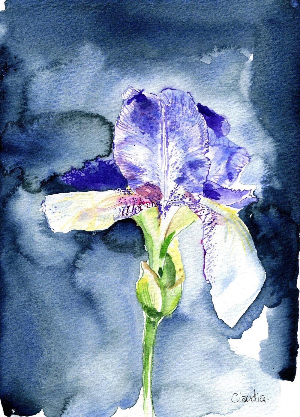 109a Claudia Plunkett,  Iris, Pen & watercolour on paper