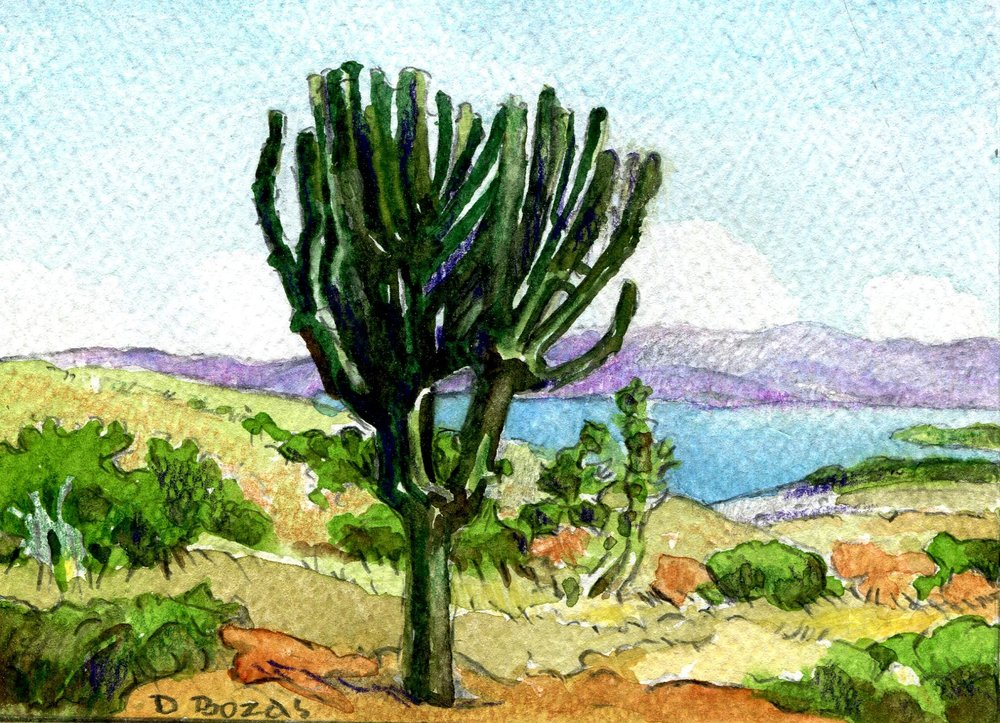 112a Diamond Bozas, Study of Euphorbia near Pobane Dam, Nkwalini 1, Watercolour on paper