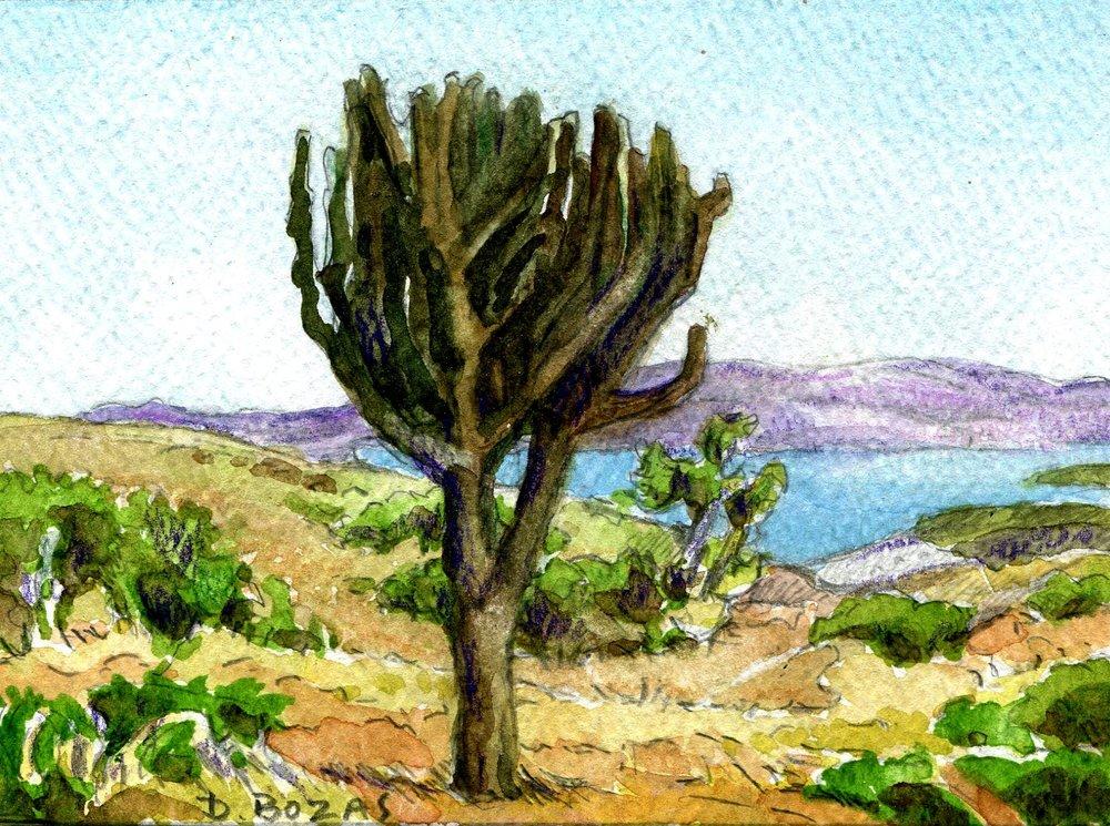 112b Diamond Bozas, Study of Euphorbia at Pobane Dam, Nkwalini 2, Watercolour on paper